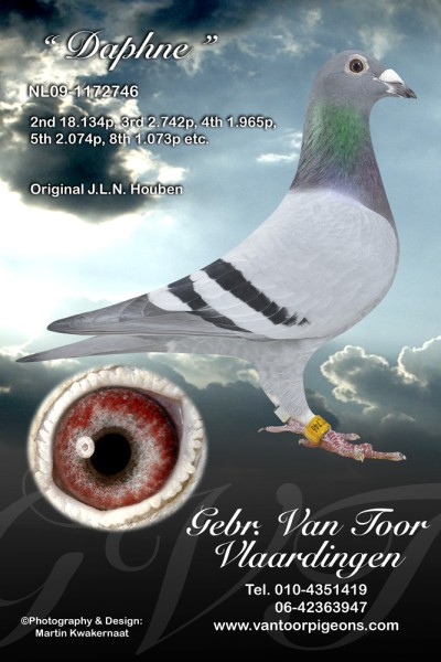 NL09-1172746